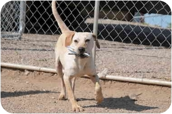 Labrador Retriever Mix Dog for adoption in Marion, Wisconsin - Ally