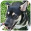 Photo 3 - Husky/Finnish Spitz Mix Dog for adoption in Lincolnton, North Carolina - Maleen