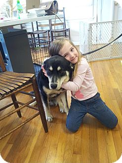 Husky/Shepherd (Unknown Type) Mix Dog for adoption in Knoxville, Tennessee - Bo