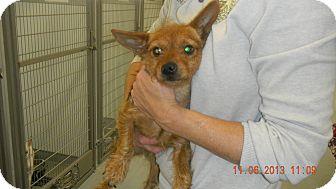 Yorkie, Yorkshire Terrier Mix Dog for adoption in Sandusky, Ohio - PATSY