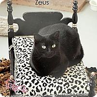 Adopt A Pet :: Zeus - St Louis, MO