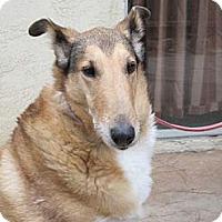 Adopt A Pet :: Claire - San Diego, CA