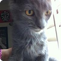 Adopt A Pet :: Damen - Phoenix, AZ