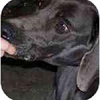 Adopt A Pet :: Blue - Eustis, FL