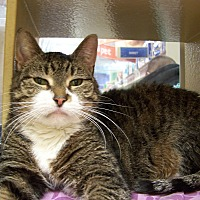 Adopt A Pet :: Jessica - Jersey City, NJ