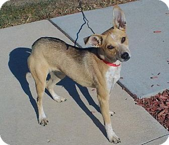 Terrier (Unknown Type, Medium) Mix Dog for adoption in Knoxville, Iowa - Ally