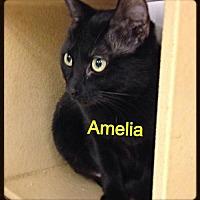 Adopt A Pet :: Amelia - Baton Rouge, LA