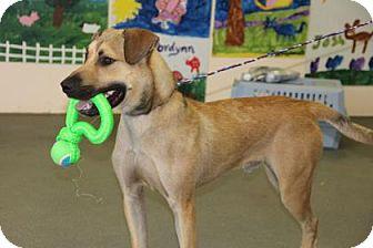Shepherd (Unknown Type) Mix Dog for adoption in Greensboro, North Carolina - Roscoe
