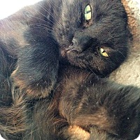 Adopt A Pet :: Whimsey - Fairfax, VA