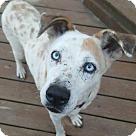 Adopt A Pet :: Azula