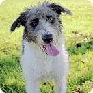 Adopt A Pet :: A - LUCIE