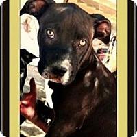 Adopt A Pet :: Heidi - Rancho Cucamonga, CA