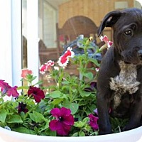 Adopt A Pet :: Carl - Pequot Lakes, MN