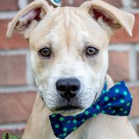 Adopt A Pet :: Porter - Savannah, GA