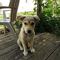 Adopt A Pet :: TUCKER - Winnipeg, MB