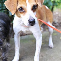 Adopt A Pet :: Copper is reduced! - Washington, DC