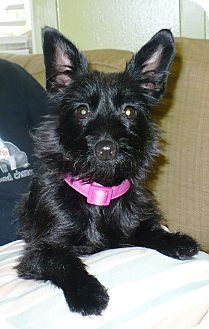 Terrier (Unknown Type, Small) Mix Dog for adoption in Eastpoint, Florida - Tilly