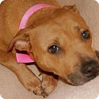 Adopt A Pet :: Fancy - Seattle, WA