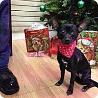 Adopt A Pet :: Jazz - Garwood, NJ