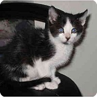 Adopt A Pet :: Beau - Davis, CA