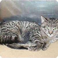 Adopt A Pet :: Sarabeth - Colmar, PA