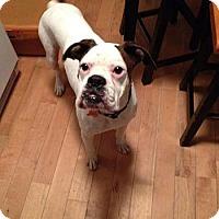 Adopt A Pet :: Peppermint Schnapps - Springfield, MO