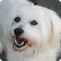 Adopt A Pet :: Nelson - Canoga Park, CA