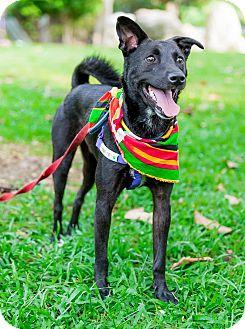 Labrador Retriever Mix Dog for adoption in Castro Valley, California - Jason