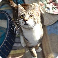 Adopt A Pet :: Charley - Kelso/Longview, WA