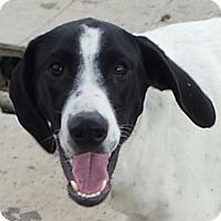Adopt A Pet :: Nelson - Preston, CT
