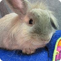 Adopt A Pet :: Dax - Newport, DE