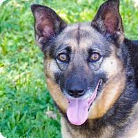 Adopt A Pet :: Phoebe - Lincolnton, NC