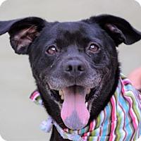 Adopt A Pet :: Renee - Lincolnton, NC