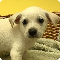 Adopt A Pet :: Ronnie - Decatur, AL