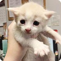 Adopt A Pet :: Flint - Lincolnton, NC