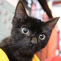 Adopt A Pet :: Koda - Sarasota, FL