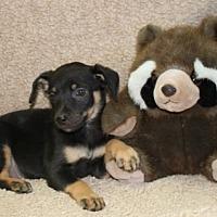 Adopt A Pet :: Taco - Brattleboro, VT