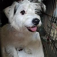 Adopt A Pet :: Frosty - San Antonio, TX