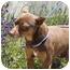 Photo 2 - Miniature Pinscher Mix Dog for adoption in Berkeley, California - Reese