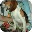 Photo 3 - Beagle Mix Dog for adoption in Elwood, Illinois - Highway