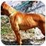 Photo 4 - Boxer Dog for adoption in Oswego, Illinois - Shelby
