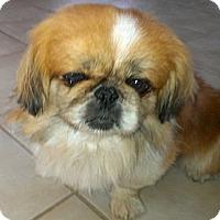 Adopt A Pet :: Clark - Sacramento, CA