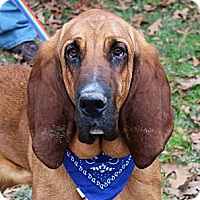 Adopt A Pet :: Luke - PENDING, in New England - kennebunkport, ME