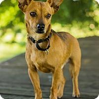Adopt A Pet :: Hulk - Georgetown, KY