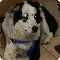 Adopt A Pet :: Freckles - Phelan, CA