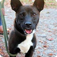 Adopt A Pet :: Jumanji - Naugatuck, CT