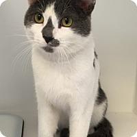 Adopt A Pet :: Beamer - Merrifield, VA