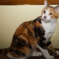 Adopt A Pet :: Mary - Plant City, FL