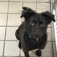 Adopt A Pet :: Sam (Westhampton) - New York, NY