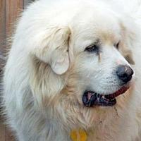 Adopt A Pet :: Ricky in MA - Beacon, NY